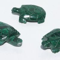 Tortugas del Congo