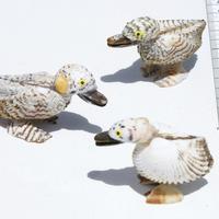 Los patos de conchas