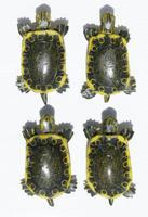 Colgantes de tortugas