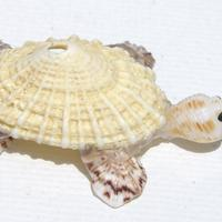 Tortuga de conchas