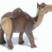 Camello egipcio