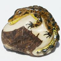 Alligator de tagua