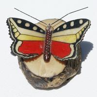 Mariposa de tagua